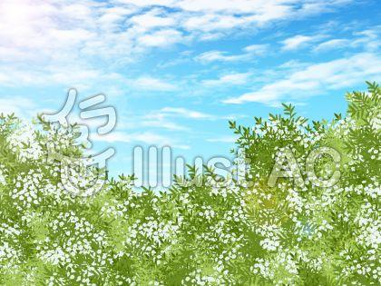 白い花と青空のイラスト