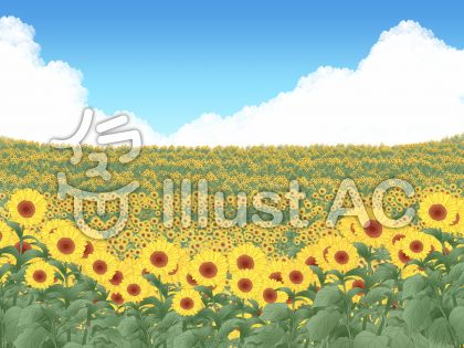 背景 ヒマワリ畑のイラスト