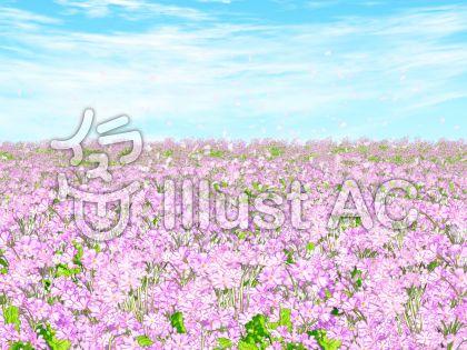 サクラソウの花畑のイラスト